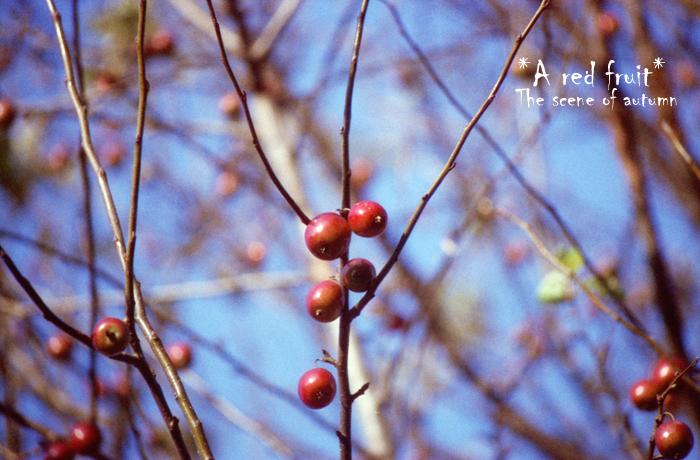The scene of autumn