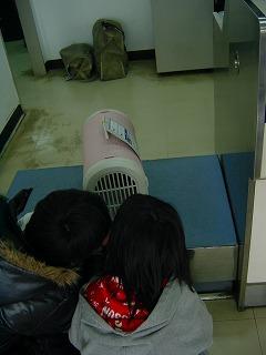 2008.1.19 東家とパグ赤ちゃん 020