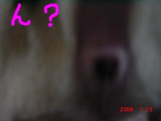2008.1.23 パグすず 015