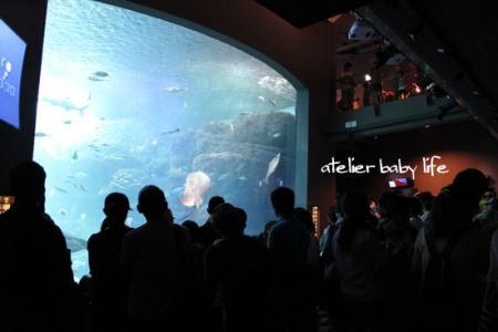 お盆休み中の江ノ島水族館