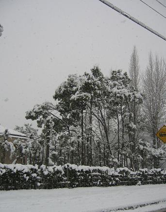 2008291雪