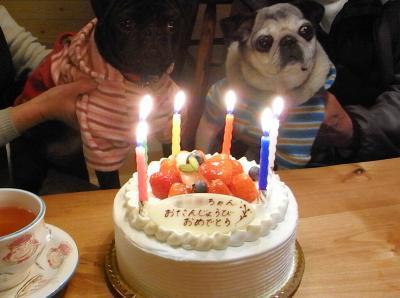 080202ケーキと2ワン