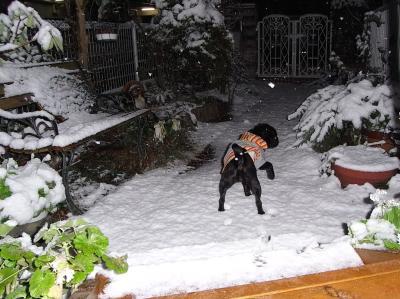 080210また雪だぁ~
