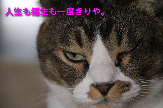 IMG_0697_R人生も猫生も一度きりや。