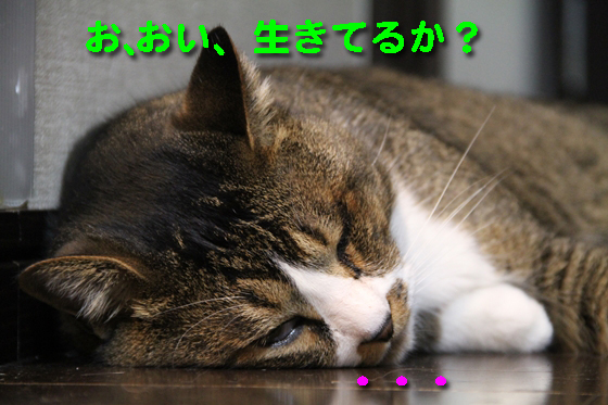 IMG_1157_Rお、おい、生きてるか?