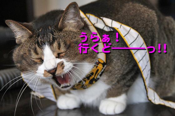 IMG_0008_Rうらぁ行くどーっ!!
