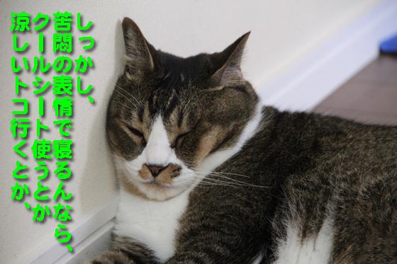 IMG_0006_R苦悶の表情で寝るんなら、