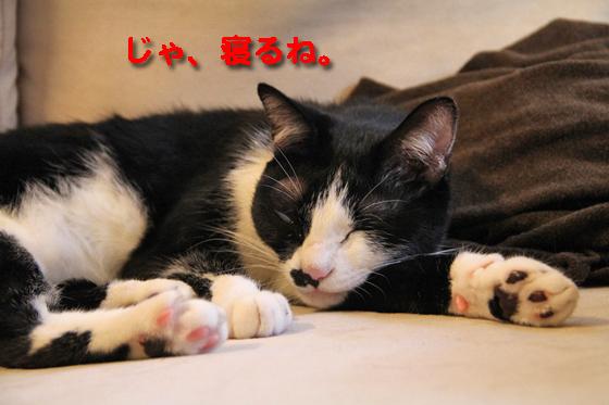 IMG_0303_Rじゃ、寝るね。ゆきち