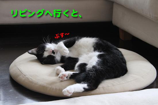IMG_0105_Rリビング、ゆきちぷしゅ~寝