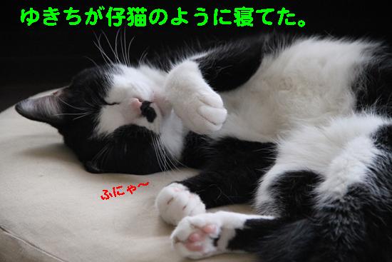 IMG_0107_Rゆきちが仔猫のように寝てた。