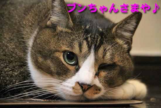 IMG_0313_Rブンちゃんさまや♪