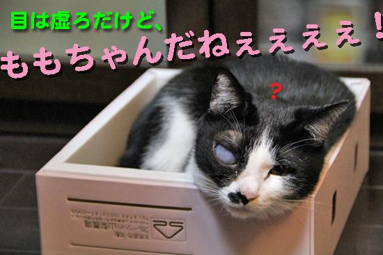 IMG_0146_Rももちゃんだねぇぇぇぇ!