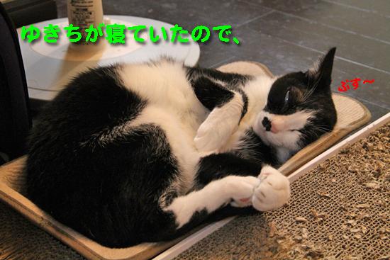 IMG_0003_Rゆきちが寝ていたので、ぷす