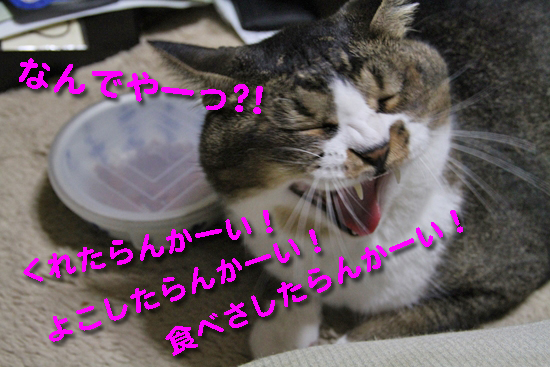 IMG_0108_Rくれたらんかーい!