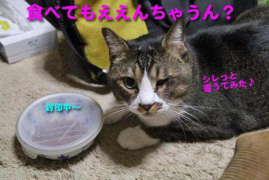 IMG_0560_R食べてもええんちゃうん?シレっと♪