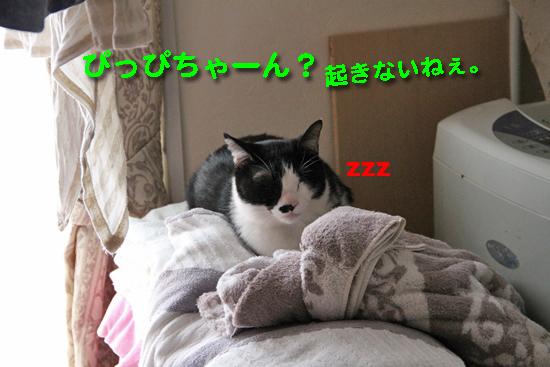 IMG_0540_Rぴっぴちゃーん?起きないねぇ。