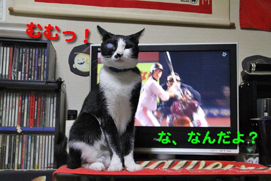 IMG_0447_Rむむっ!な、なんだよ?