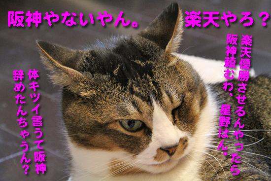 IMG_0820_R阪神やないやん。  楽天やろ?