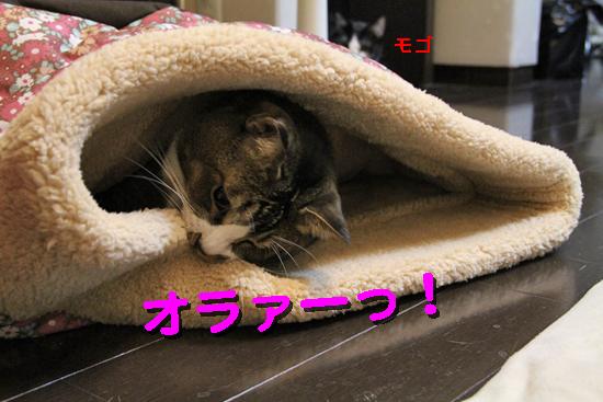 IMG_0110_Rオラァーっ!モゴ