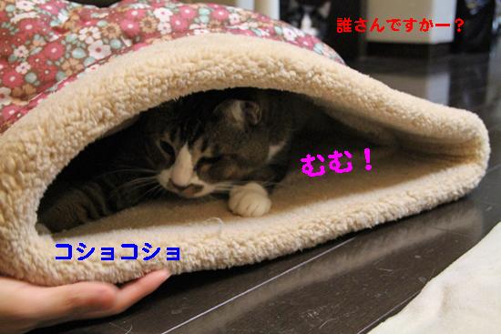 IMG_0108_Rコショコショむむ!