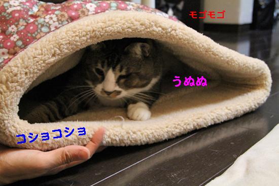 IMG_0109_Rコショコショうぬぬ
