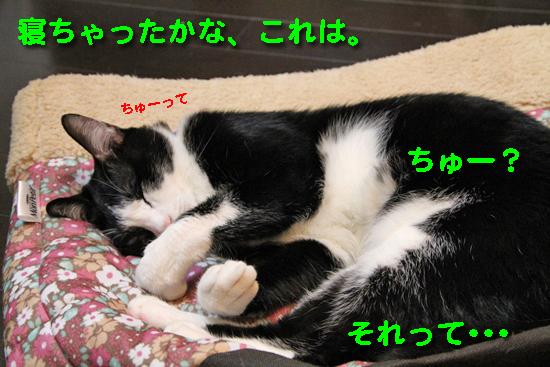 IMG_0489_R寝ちゃったかな、これは。ちゅーって