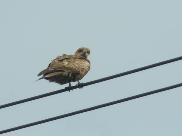 鳥たち22