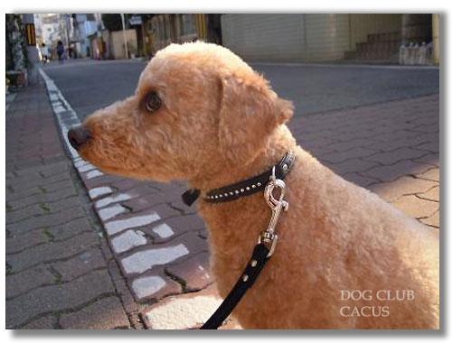 cacus-110406b.jpg