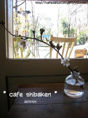 cafe shibaken◇花瓶の桜
