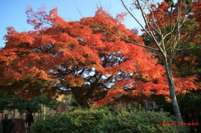 円山公園06