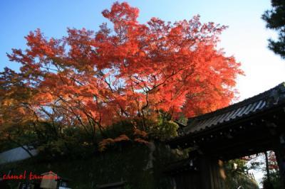 円山公園08