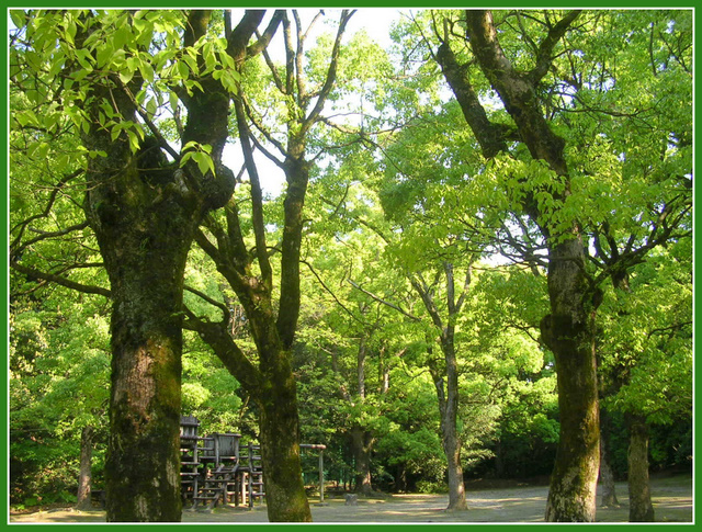新緑の「ドン広場」
