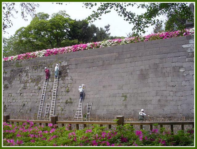 石垣の清掃