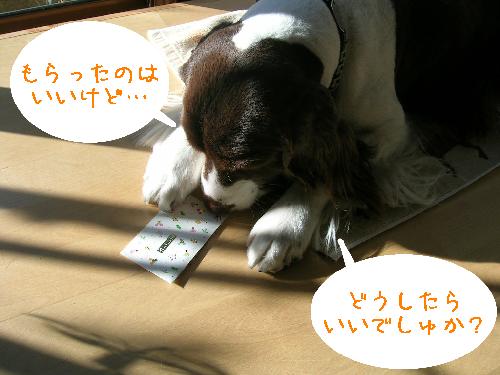 dog 051