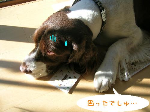 dog 052