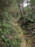 雲辺寺への登山道