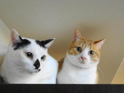 会員のわらちゃちゃさんちの猫さんたち