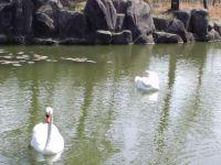 長居公園20110417 05_200