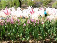 長居公園20110417 03_200