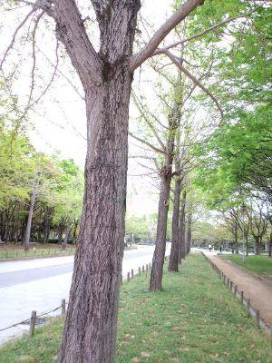 大仙公園20110422 02_400