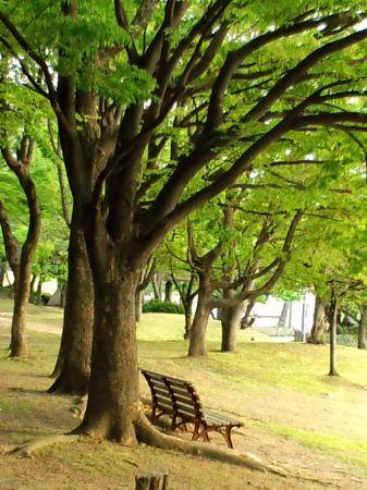 大仙公園20110430_450