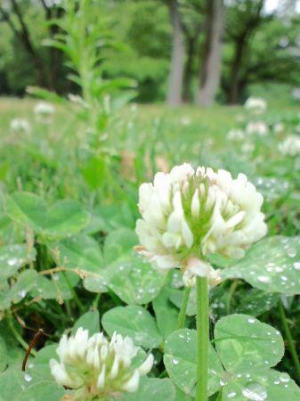 雨の大仙公園20110510_450