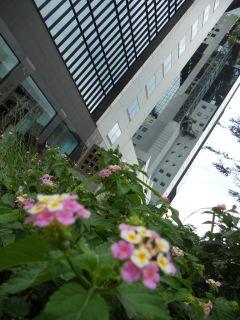 梅田・中崎町界隈探索20110727 034_320