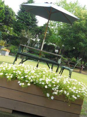 堺フラワーセンター20110724 010_400