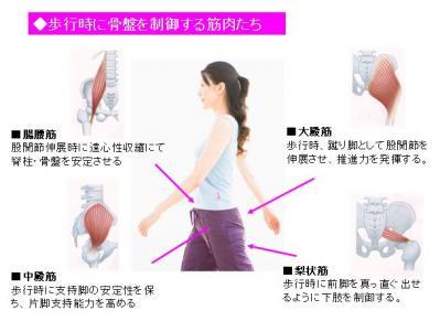 歩行時の筋肉