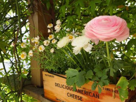 ラナンキュラスと花かんざし
