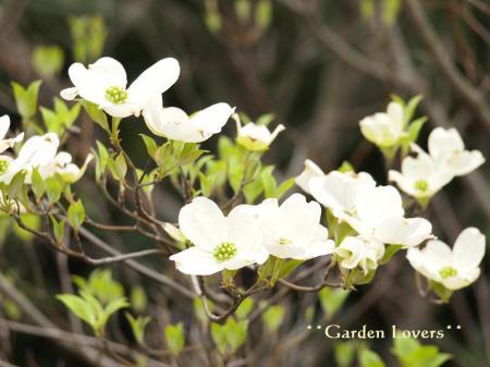 ライムグリーンの花