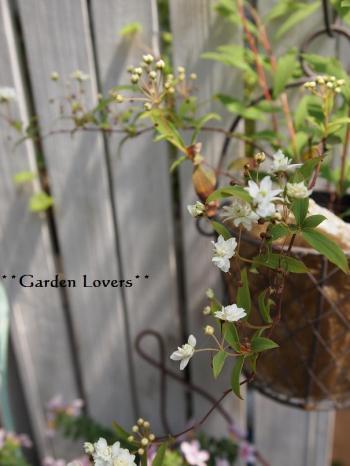 かわいい小花