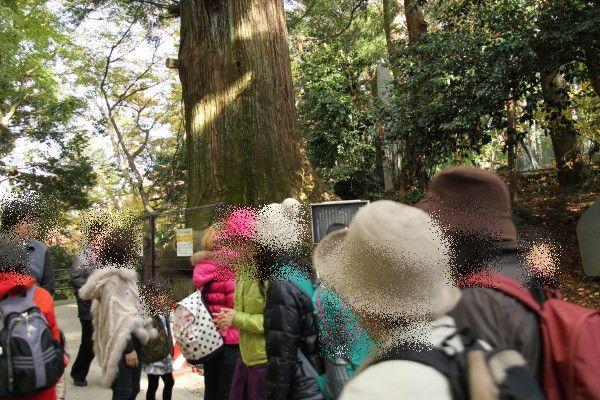タコ杉の所は人がいっぱい