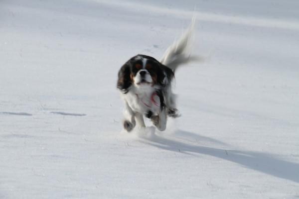 エリー走る